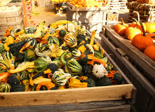 Spotted colorful pumpkins Stock Images