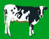 Spotted cow. On a green background Stock Images