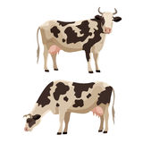 Spotted cow vector illustration farm cattle animal Royalty Free Stock Photography