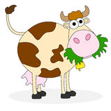Spotted cow on white background Stock Photos