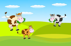 Spotted cows grazing in a meadow. Vector illustration Stock Photo