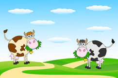 Spotted cows grazing in a meadow. Vector illustration Royalty Free Stock Image