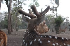 Spotted deer adorned with innocence stock photos