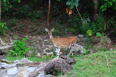 Spotted deer and monkeys Stock Images