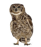 Spotted eagle-owl - Bubo africanus Stock Photography