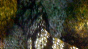 Spotted eel fish under underwater closeup Stock Photos
