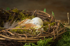 Spotted eggs in nest Stock Photography