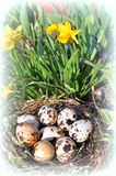 Spotted eggs in a nest and yellow flowers in a garden. Vignette. royalty free stock photo
