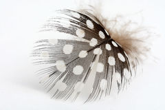 Spotted Feather Royalty Free Stock Photos