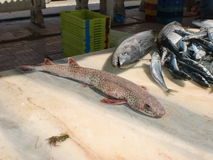 Spotted fish on the counter Royalty Free Stock Photos