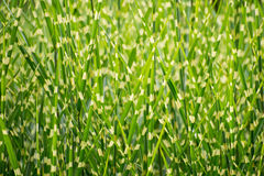 Spotted fresh green grass background Stock Image