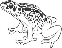 Spotted frog Stock Image