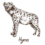 Spotted hyena isolated stock image. Image of voracious ...