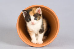 Spotted kitten and a flower pot, Stock Photos