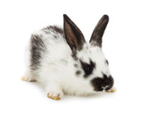 Spotted little rabbit Stock Photography