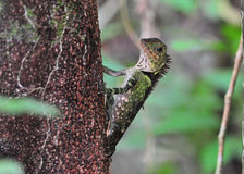 Spotted lizard. Stay on the tree stock photography