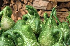 Spotted ornamental green pumpkins Stock Photos