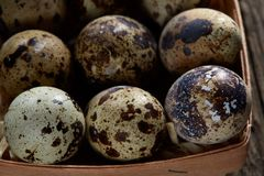 Quail eggs in a box on a vintage wooden background, top view, selective focus. Spotted quail eggs arranged in rows in a box on a vintage wooden background, top Stock Photo