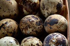 Quail eggs in a box on a vintage wooden background, top view, selective focus. Spotted quail eggs arranged in rows in a box on a vintage wooden background, top Royalty Free Stock Image