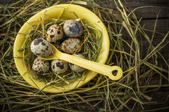 Spotted Quail Eggs in Bowl Royalty Free Stock Image