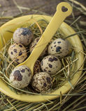 Spotted Quail Eggs in Bowl Stock Image