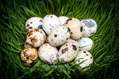 Spotted quail eggs Stock Photography
