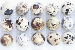 Spotted Quail eggs in egg box Stock Photos