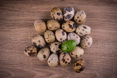 Spotted Quail eggs with one green egg on wooden background Royalty Free Stock Photos