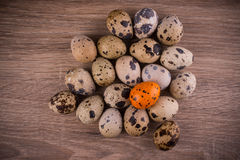 Spotted Quail eggs with one orange egg on wooden background Royalty Free Stock Image