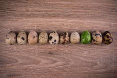 Spotted Quail eggs in a row with one green egg on wooden background Stock Images