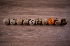 Spotted Quail eggs in a row with one orange egg on wooden background Royalty Free Stock Photo