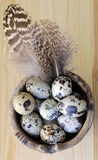 Spotted Eggs. Spotted quail eggs and speckled feathers in a small ceramic hand-made bowl stock photos