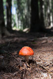 Spotted Red Capped Mushroom Stock Photography
