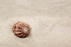 Spotted sea shell on sand. Background Stock Photo