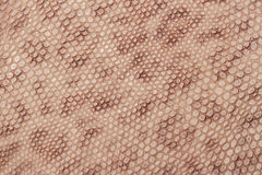 Spotted skin close up background, brown color leopard  imitation Royalty Free Stock Photo
