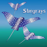 Spotted stingrays. Undersea world. Stock Photo