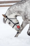 Spotted thoroughbred horse makes a bow Royalty Free Stock Images