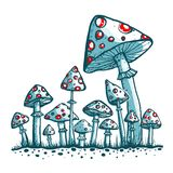 Spotted Toadstool Mushrooms Stock Photos