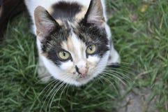 Spottedcat som ser upp på kameran Royaltyfri Foto