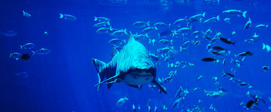 spotting för haj arkivbilder