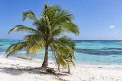 Spotts beach palm tree Royalty Free Stock Photos