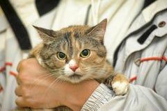 Spotty cat Stock Photos