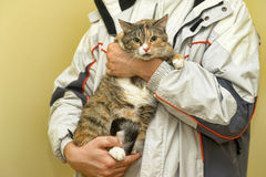 Spotty cat Royalty Free Stock Photo