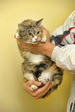 Spotty cat Stock Image