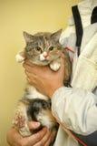 Spotty cat Stock Photography