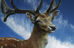 Spotty deer on blue Stock Photography