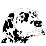 Spotty dog with trailing ears. Spotty dog dalmatian with  illustration closeup Royalty Free Stock Photos