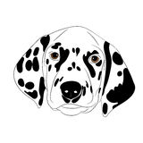 Spotty dog with trailing ears. Spotty dog dalmatian with  illustration closeup Royalty Free Stock Photography