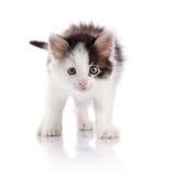 The spotty kitten. Stock Photos