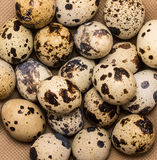 Spotty quail eggs as food background Stock Photography